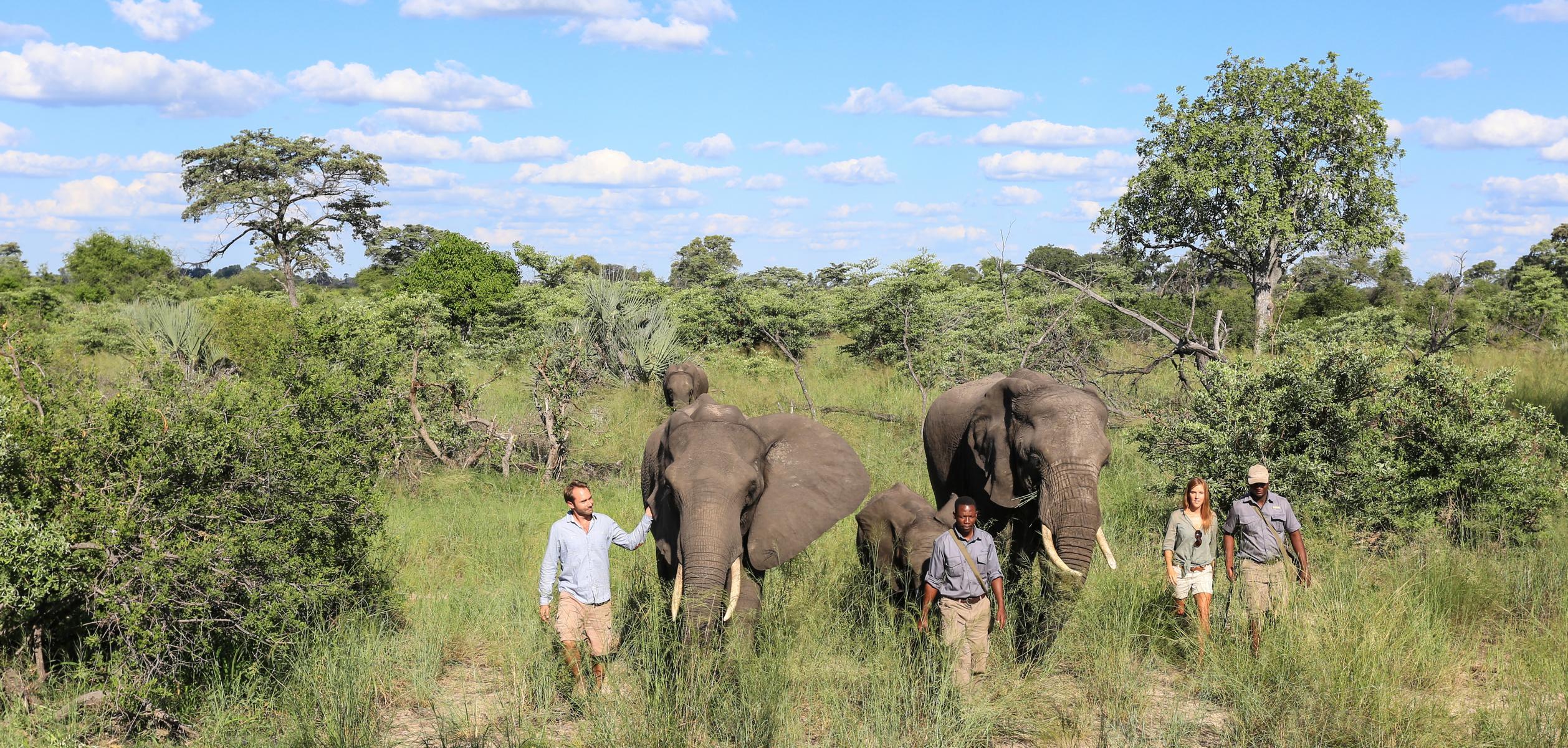Elefanten im Abu Camp, Okavango Delta, Botswana