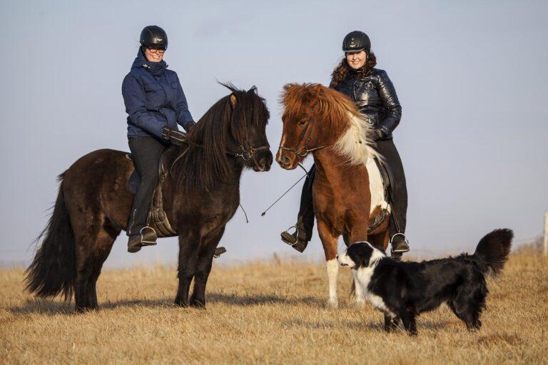 RangaHotel - 80342142-H1-The_Icelandic_horse.jpg