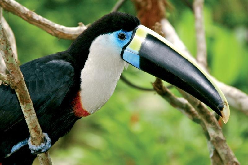 Tropenvögel im Amazonas Regenwald bei einer Kreuzfahrt mit der Aqua Nera