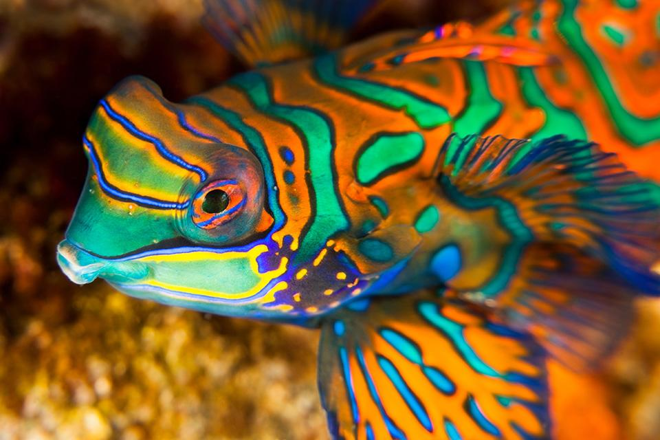 Farbenfroher Fisch in Indonesien bei einer Kreuzfahrt mit der Aqua Blu