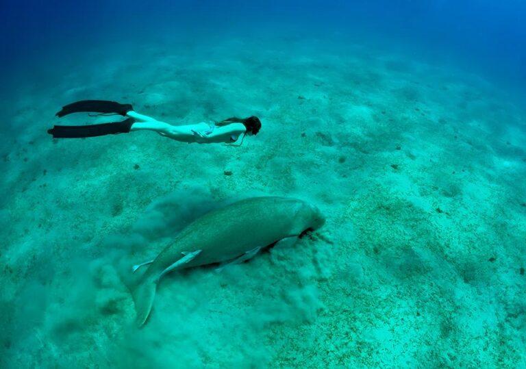Blu - snorkeling-dugong-komodo-national-park.jpg