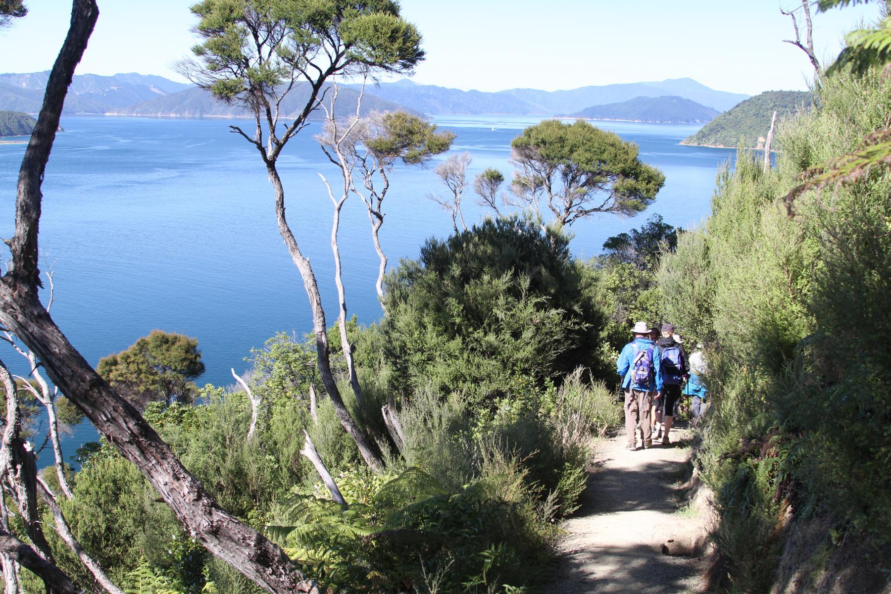 Wanderweg in den Bergen oberhalb des Wasser bei der Marlborough Lodge in Neuseeland
